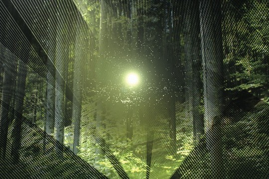 Help Curb Deforestation By Planting A Real Life Tree In Electronic Shadow's Virtual Forest [Q&A]