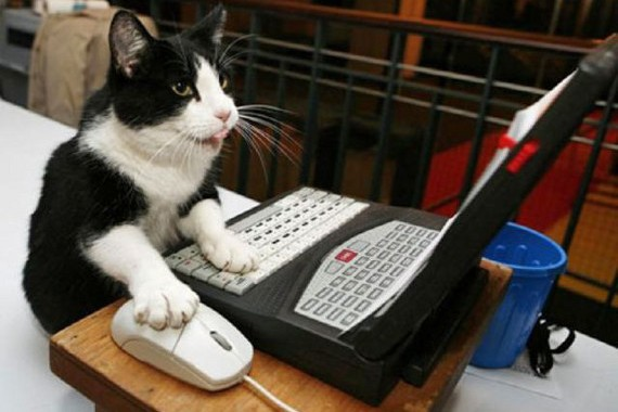 24-Hour Online Cat TV Is The Logical Conclusion Of The Internet