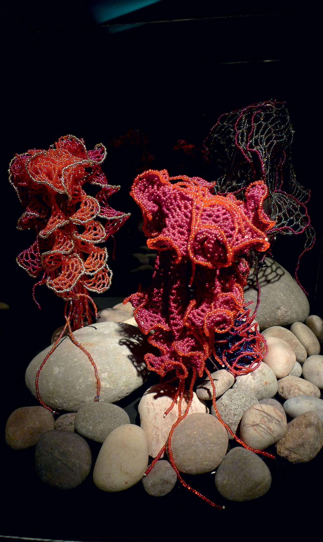 how coral reefs come about So come join in the discovery of our coral reefs and the underwater world that is so amazing and important to each and everyone one of us bubble tip anemone.