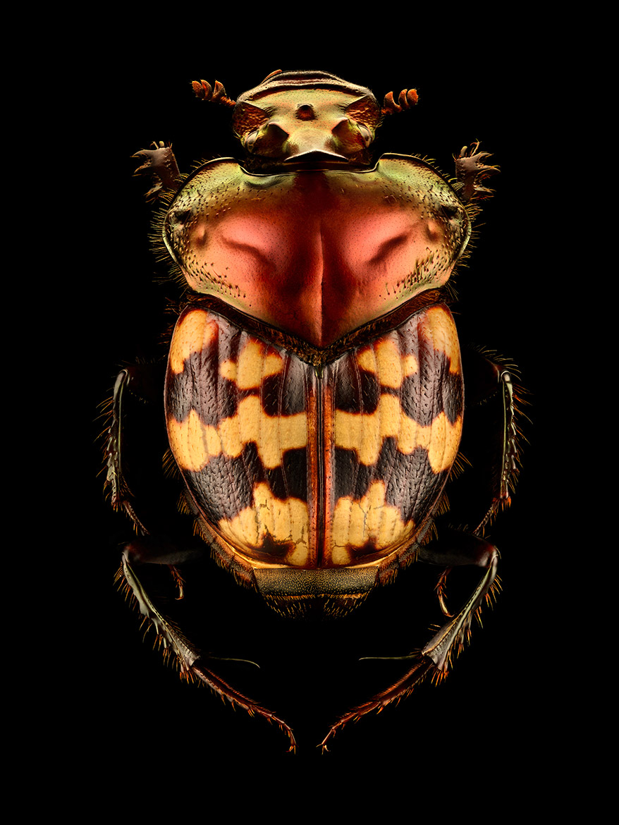 10,000 Stacked Photos Create Insanely Detailed Insect Portraits