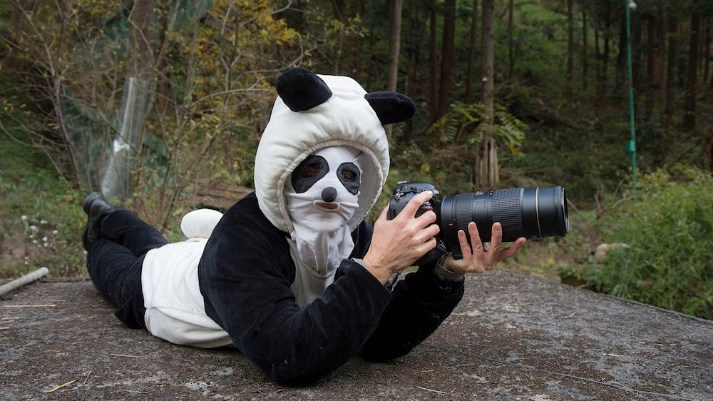 This Photographer Dressed Like a Panda to Snap Candids of Bears in the Wild
