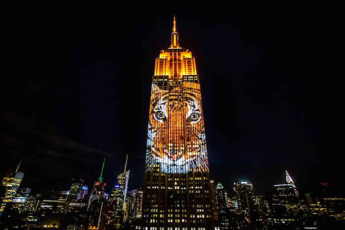 [Exclusive] See 400-Foot-Tall Endangered Animals Cover The Empire State Building